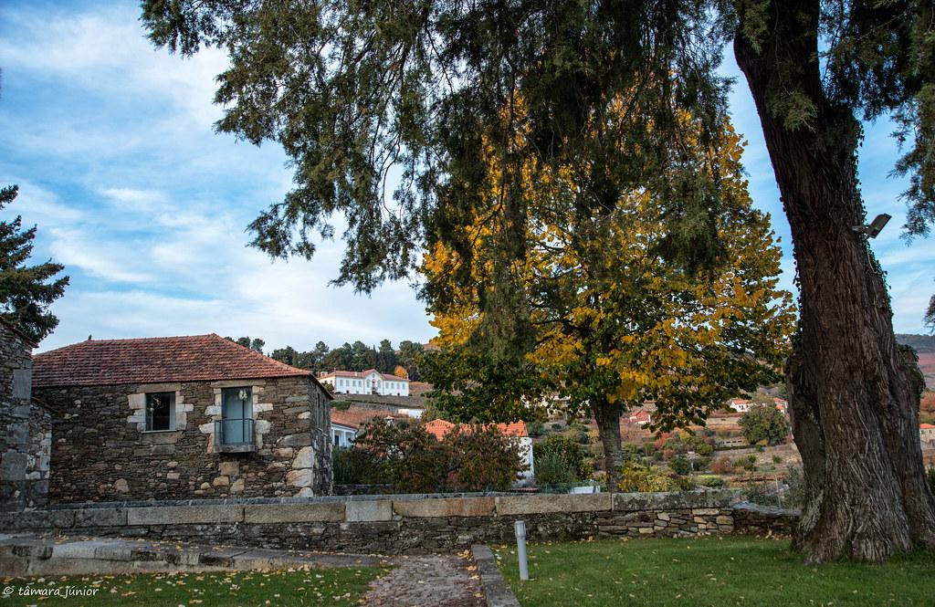 2017.- Pelo Douro no outono I (M313+N222) (284)