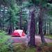 Forest home - Alaska by JLS Photography - Alaska