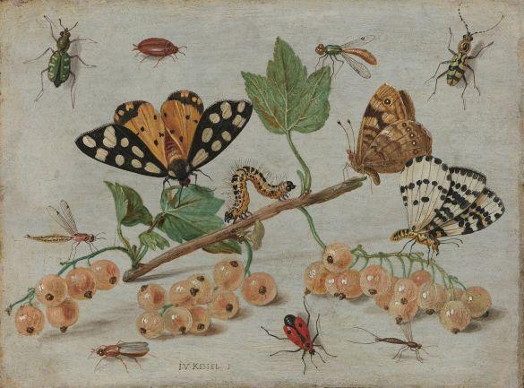RijksmuseumWorkOfTheDay JanVanKesselInsectsAndFruitC1660-1665