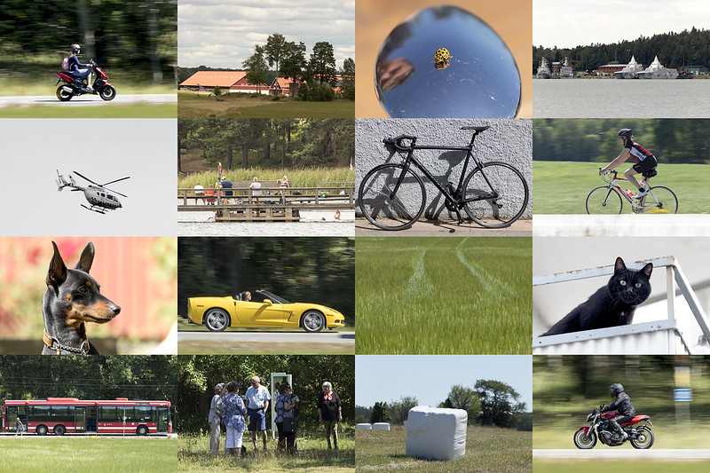 Sixteen Recent Snaps With The Canon 77D