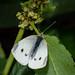 Scotland's Gardens Craigintinney Telferton July 2018 -146