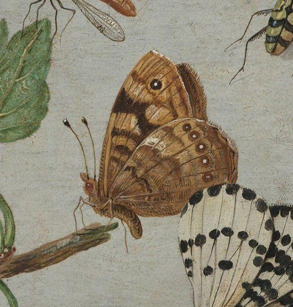 RijksmuseumWorkOfTheDay JanVanKesselInsectsAndFruitC1660-1665IsDitEenArgusvlinder