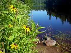 Wildflowers along the Escanaba River