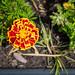 Scotland's Gardens Craigintinney Telferton July 2018 -171
