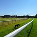 Chester racecourse, 2018 Jul 08 -- photo 3