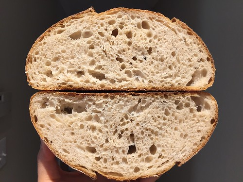 Sonora whole wheat (16%)