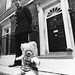 Humphrey teddy bear of Margaret Thatcher outside number ten Downing Street, September 27, 1982.