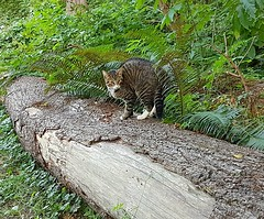 Camouflaged cat