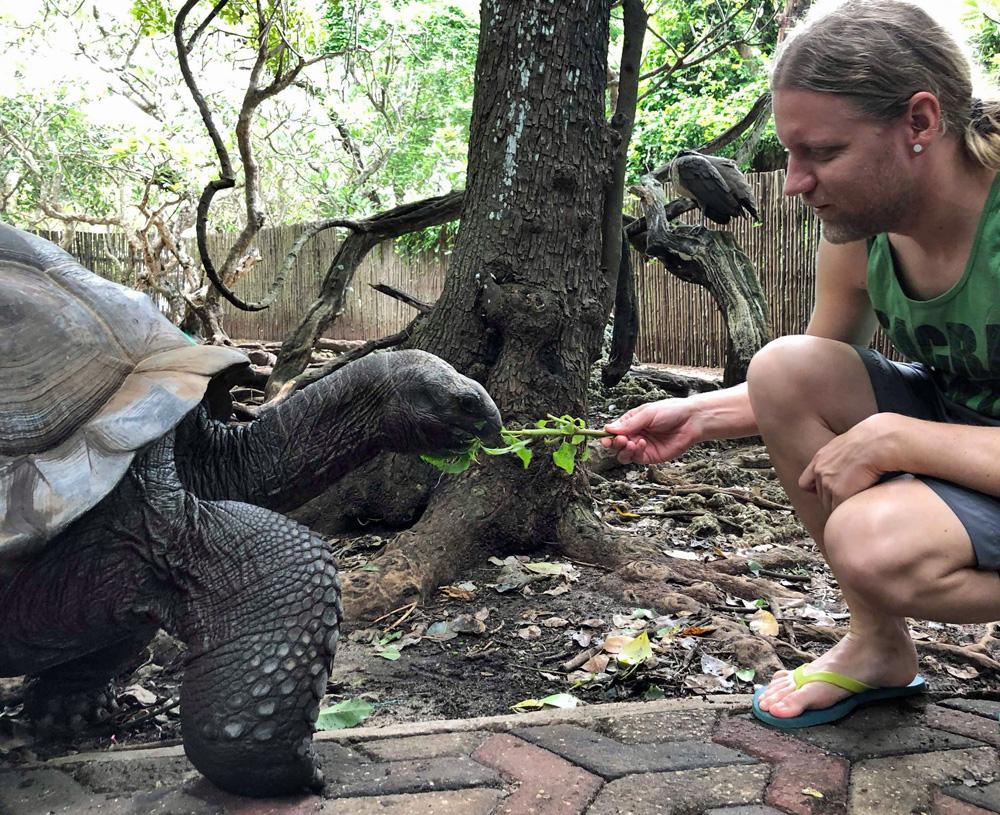 prison-island-giant-tortoise