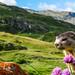 Marmot by DonRuijgrok