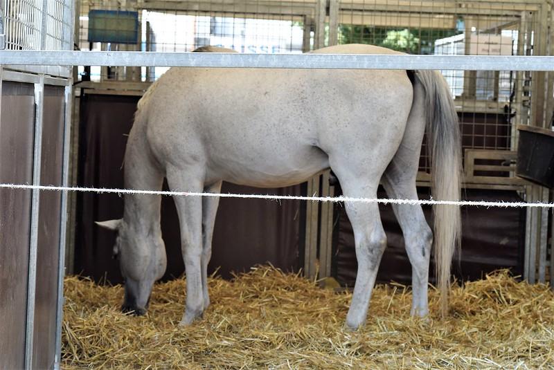 Circus Horse 07.08 (2)