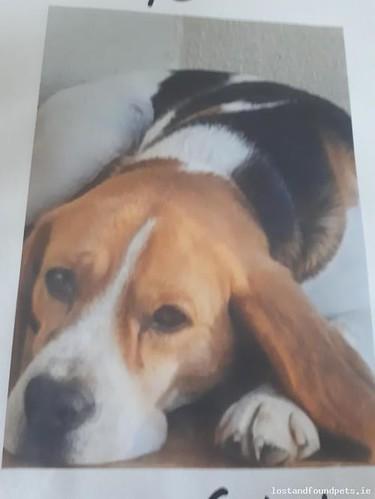 Thu, Aug 9th, 2018 Lost Male Dog - Carbury, Dreenane, Kildare