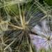Tangled Porcupine :)