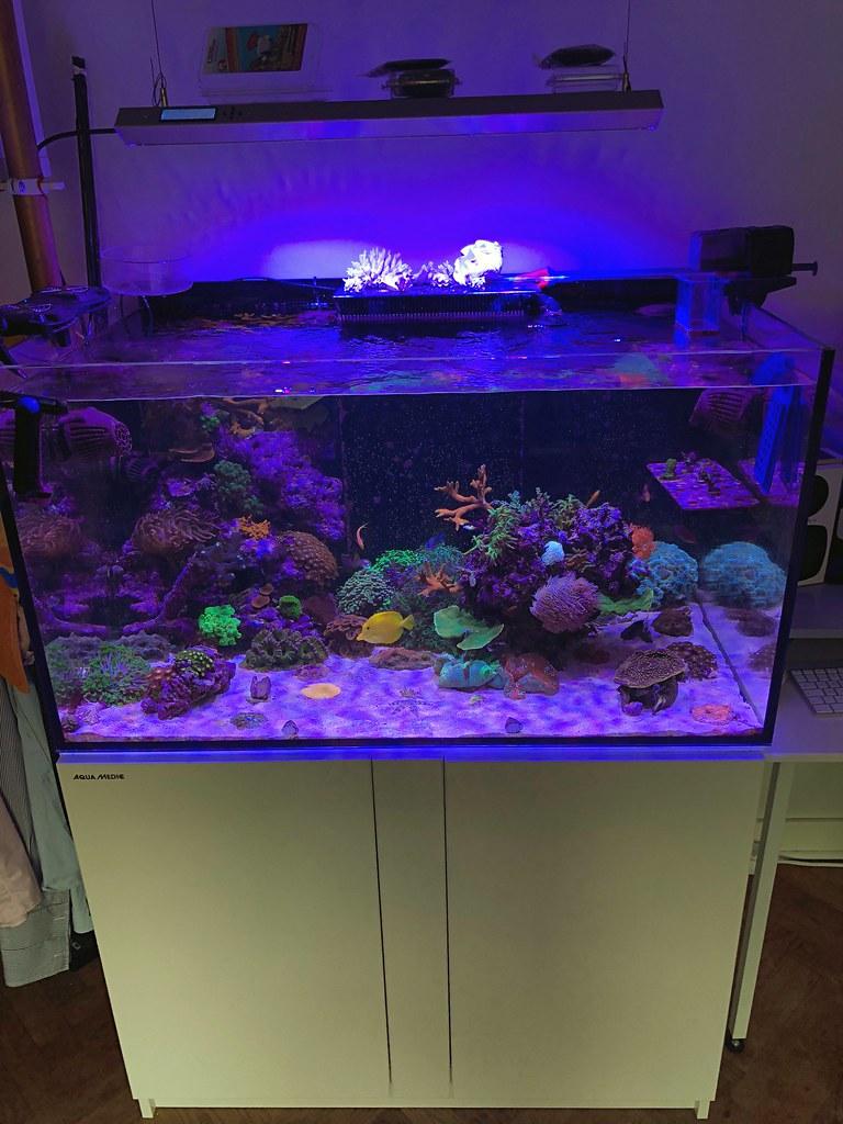 Reeftank 2018-07-29