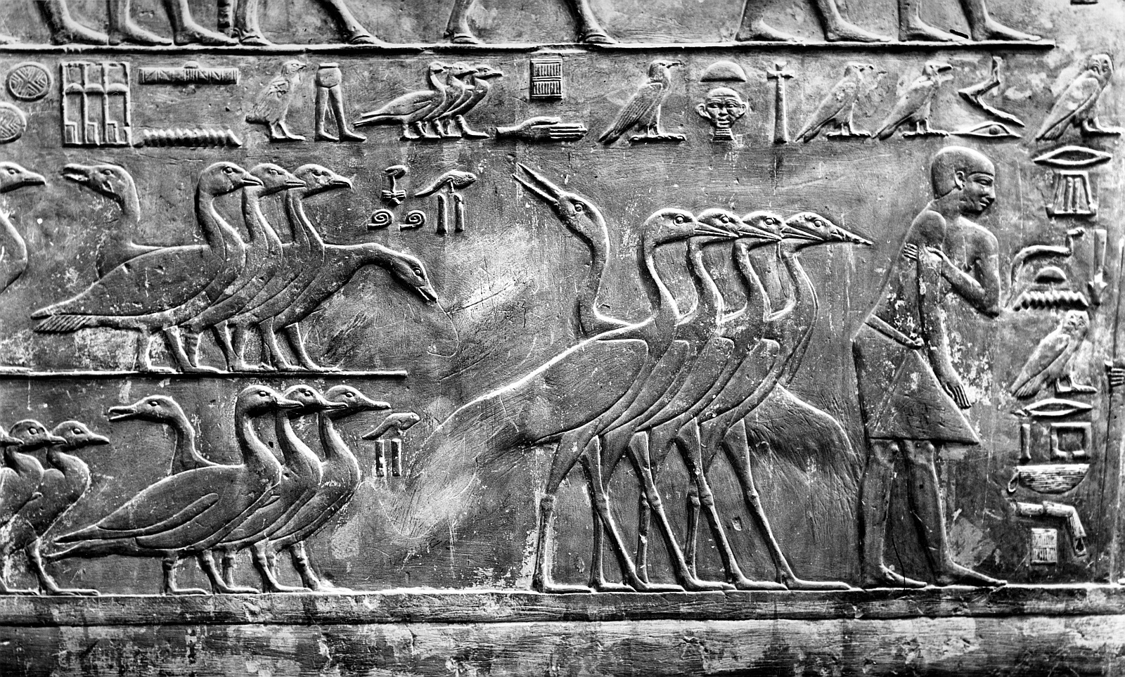 Саккара. Мастаба Птаххотепа. Рельеф с изображением домашней птицы