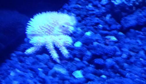 カニ 深海水族館