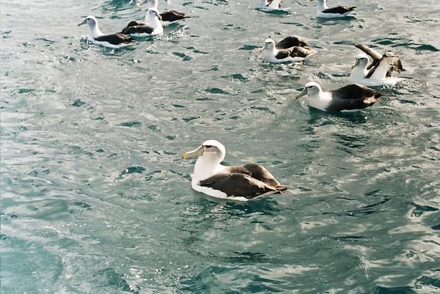 Seabird Island Boat Trips In The Uk