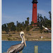 Brown Pelican & Jupiter Lighthouse