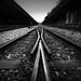 tracks by tropicalrips