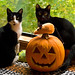 Happy Halloween from Minnie and Remi! by The Cat's MeOM