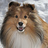 SheltieBoy's buddy icon