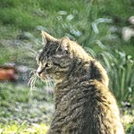 20180418-185903 - Cat Garden Bokeh