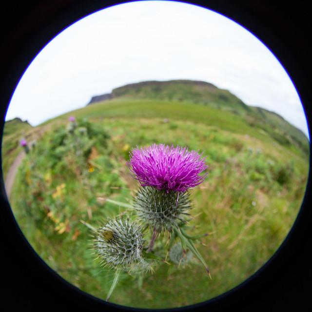 Scotland 2018 - Highland flower