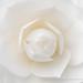 White Camellia (I), 2.9.18
