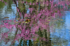 Reflection, Clark Botanic Garden, Roslyn Heights, New York