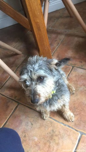 Wed, Aug 8th, 2018 Lost Female Dog - Coolgreaney Road, Arklow, Wicklow
