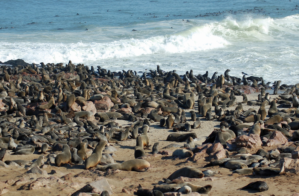 cape-cross-seal-colony