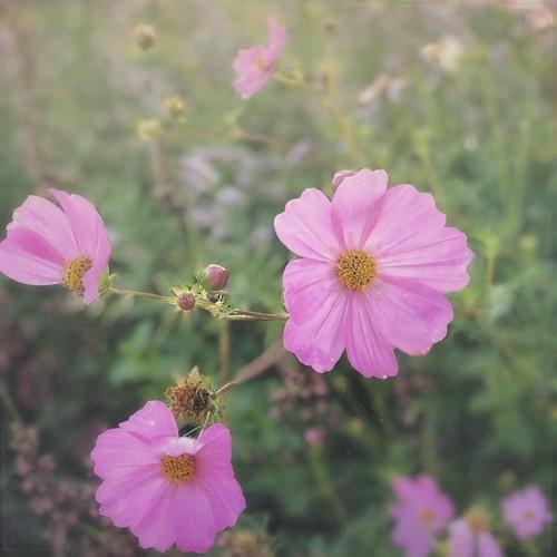 Sara's Garden...Ten Sleep, Wyoming Edition