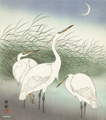 Herons in shallow water (1934) by Ohara Koson (1877-1945). Original from the Rijks Museum. Digitally enhanced by rawpixel.