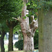 Cotteridge Park - carved tree from Franklin Road