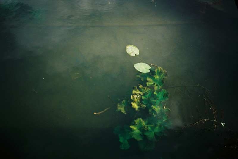 water lilies, reflections, Underfall Yard