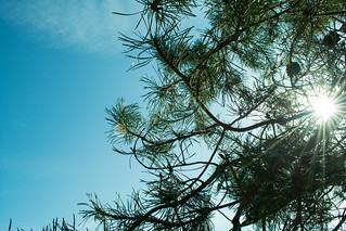 20180326-03_Sunlight through the conifer branches