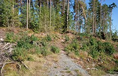 Ved inngangen til lysløypa - Prestegårdsskogen