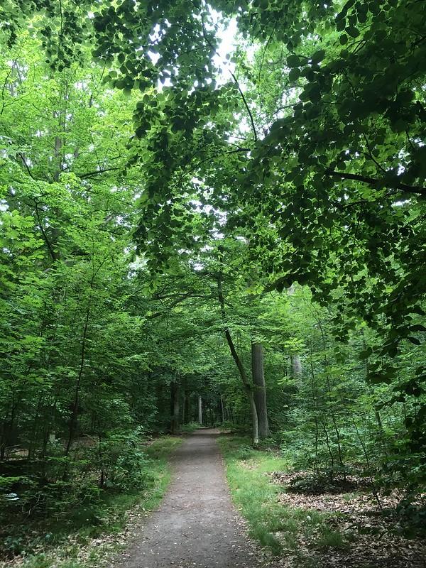 sunday, lush green in pålsjö forest, helsingborg