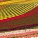 Les tulipes de Haute-Provence by solo-graphique