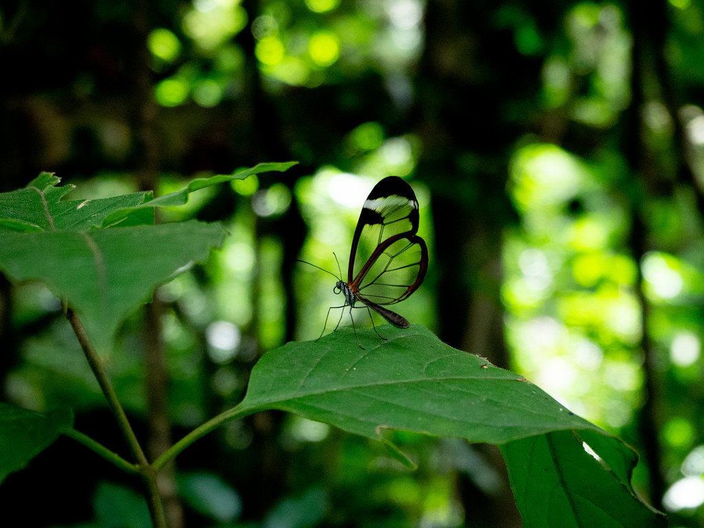see-through butterfly!
