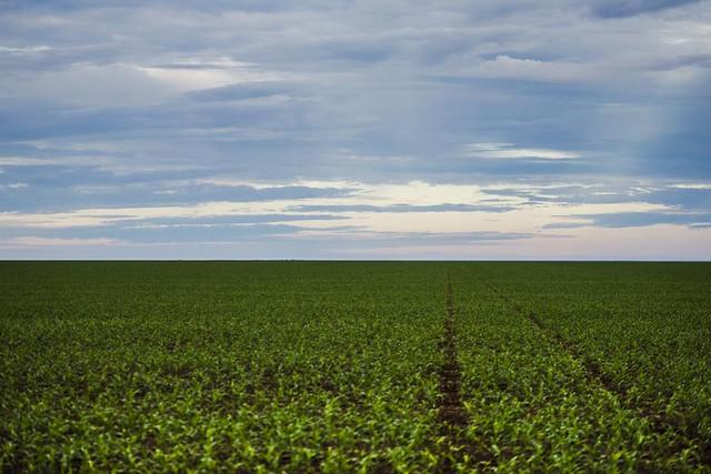 Área de plantação de soja no noroeste do Mato Grosso, estado que tem mais propriedades acima de 10 mil hectares - Créditos: Marcelo Camargo/Agência Brasil