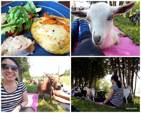 Farm lunch and goat yoga
