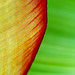 Banana Leaf by only lines