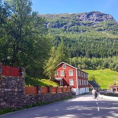 Norwegian red