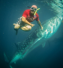 A Whale (Shark) of a Tale
