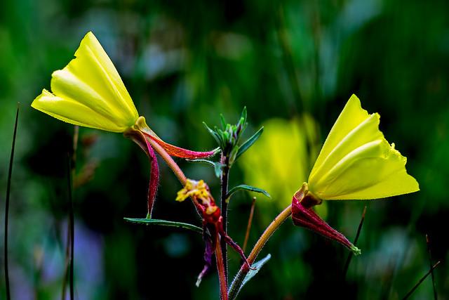 Wild-Flower-7-7D1-073118