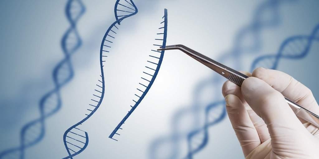 CRISPR/cas12a : Une nouvelle protéine d'édition des gènes