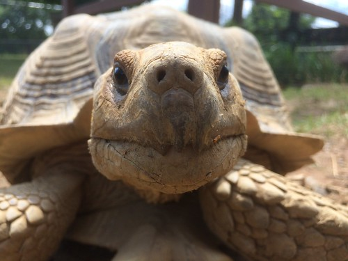 Tortoise, Roer's Zoofari