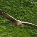 Wildlife at Warwick, England