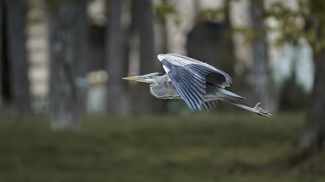 BiF (1/2) : a heron